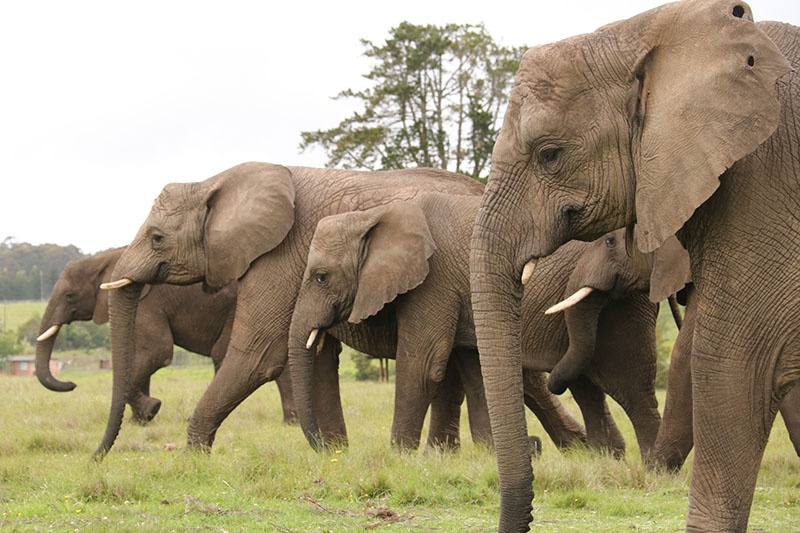 Image result for herd of elephants